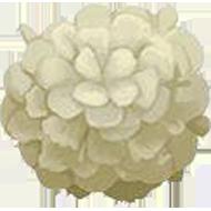 Chinese Snowball