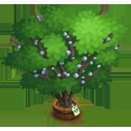 Elder Southern Wax Myrtle Tree