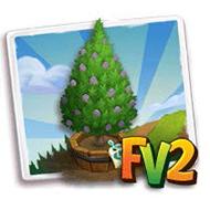 Elder Noble Fir Tree
