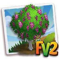 Heirloom Purple Robe Locust Tree