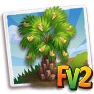 Carnauba Palm Tree