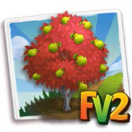Packham Pear Tree