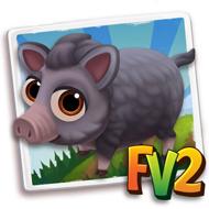 Baby Grey Pygmy Mini Pig