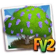 Blue Jacaranda Tree