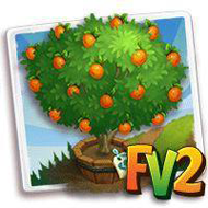Elder Nugget Apricot Tree