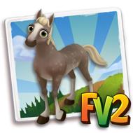 Baby Silver Dappled Rocky Mountain Horse