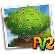 Sunburst Witch Hazel Tree