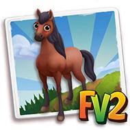 Blood Bay Paso Fino Horse