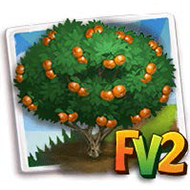 Nules Clementine Tree