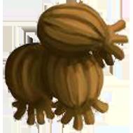 Turkish Hazelnut