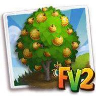 Heirloom Nashi Pear Tree