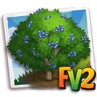 Blue Elderberry Tree