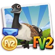 Prized Canada Goose
