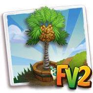 Elder Coco De Mer Palm Tree