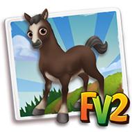 Baby Spanish Barb Horse