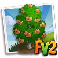 Gandaria Tree