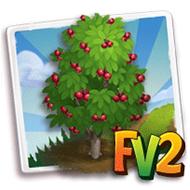 Kokum Tree