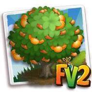 Heirloom Brown Select Satsuma Mandarin Tree