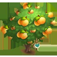 Heirloom Poppy Apricot Tree