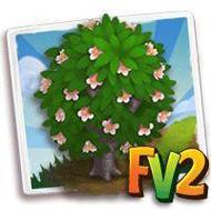 Okame Blossom Tree