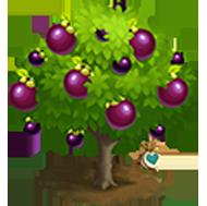 Heirloom Purple Mangosteen Tree
