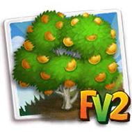 Hamlin Orange Tree