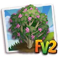 Pink Dawn Viburnum Tree