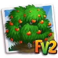 Sanguinello Blood Orange Tree