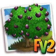 Star Apple Tree