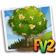 Heirloom Brazilian Ironwood Tree