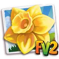 Cameo Jewel Daffodil