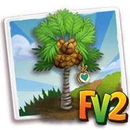 Heirloom Coco De Mer Palm Tree