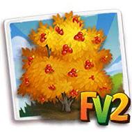 Spicebush Tree