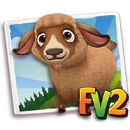 Caramel Pygora Goat