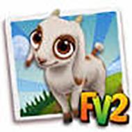 Baby Jamnapari Goat
