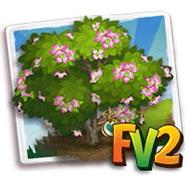Heirloom Flowering Dogwood Tree