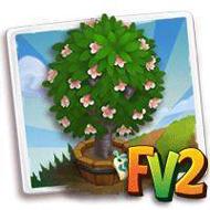 Elder Okame Blossom Tree