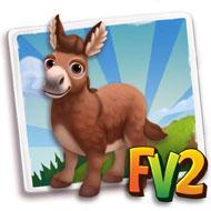 Red Sorrel Mini Donkey