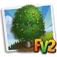 Candy Pecan Tree