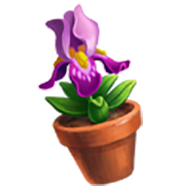 Bearded Iris Flower Pot