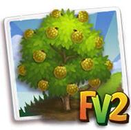 Sugar-Apple Tree