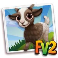 Baby Tennessee Myotonic Goat