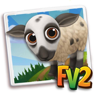 Baby Hog Island Sheep