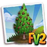Afghanistan Pine Tree