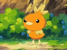 May Torchic
