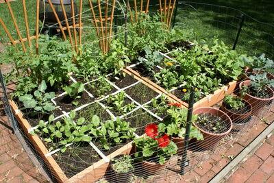 Square-Foot-Gardening