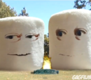 Marshmallows (Adventures in Science)