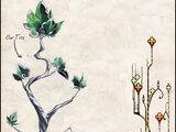 Casimir Tree