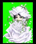 Winter-rose-f