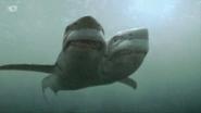Mutant Shark (2-Headed Shark Attack)